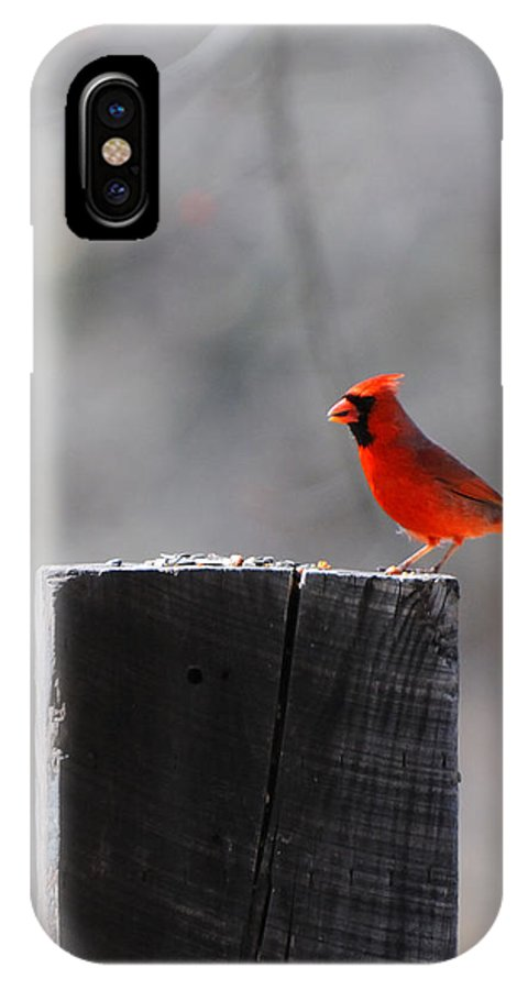 Bird IPhone X Case featuring the photograph Cardinal by Scott Angus