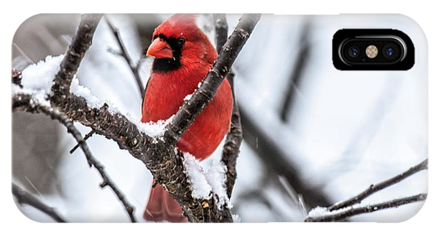 Cardinal IPhone X Case featuring the photograph Cardinal Snow Scene by Lara Ellis