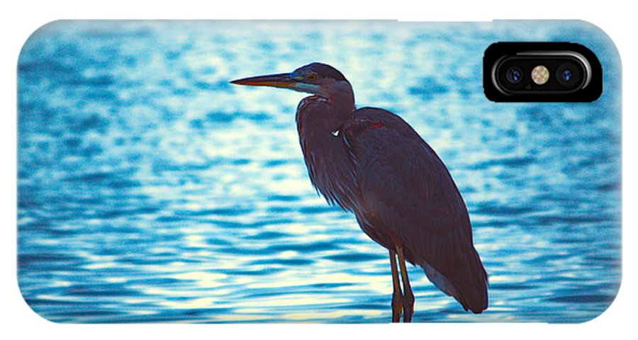 Bird IPhone X Case featuring the photograph Carribean Light by Loretta Jean Photography
