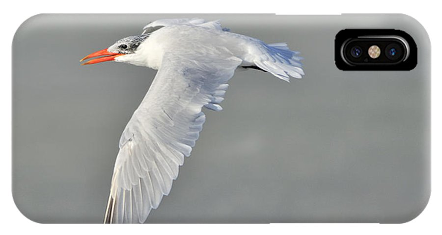 Caspian Tern IPhone X Case featuring the photograph Caspian Tern In Flight by Bradford Martin