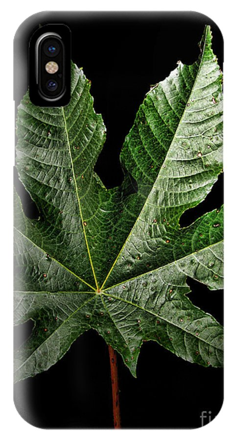 Nature IPhone X Case featuring the photograph Castor Bean Leaf by Debbie Portwood