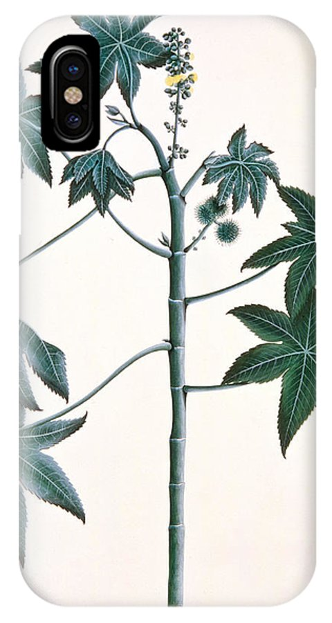 Leaf IPhone X Case featuring the painting Castor Oil Plant by Indian School