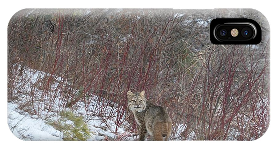 Bobcat IPhone X Case featuring the photograph Cat Beauty by Thomas Phillips