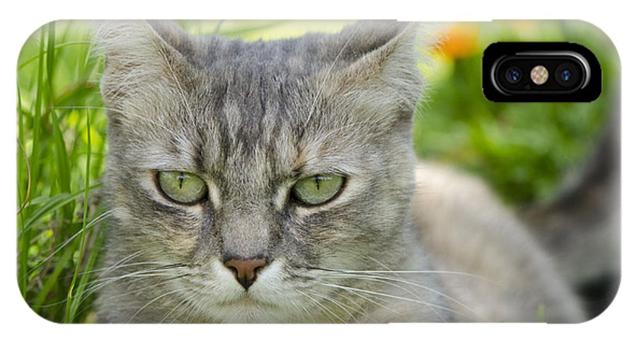 Cat Eyes IPhone X Case featuring the photograph Cat Eyes by Julie Wynn