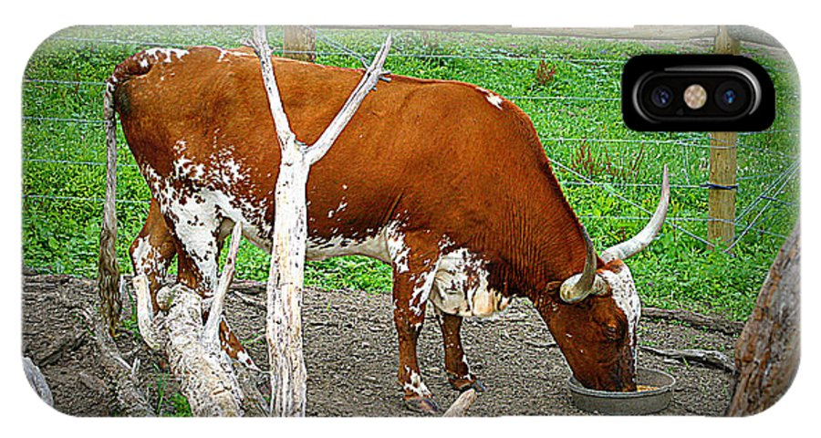 Longhorn Cattle IPhone X Case featuring the photograph Catalina by Ann Butler