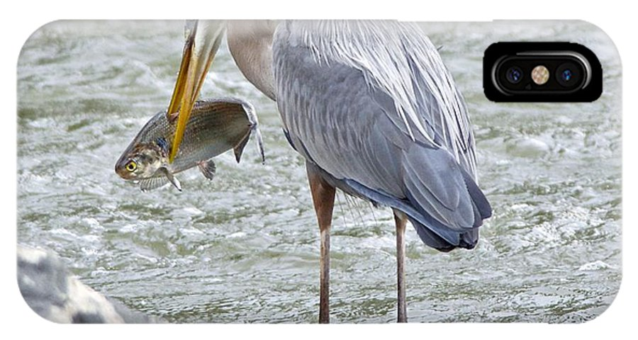 Great Blue Heron IPhone X / XS Case featuring the photograph Catch Of The Day by MCM Photography