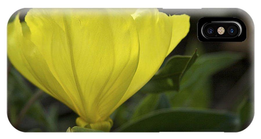 Nature IPhone X Case featuring the photograph Catching Sunshine - Missouri Primrose Art Print by Jane Eleanor Nicholas