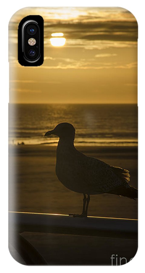 Gull IPhone X Case featuring the photograph Catching The Rays by Steev Stamford