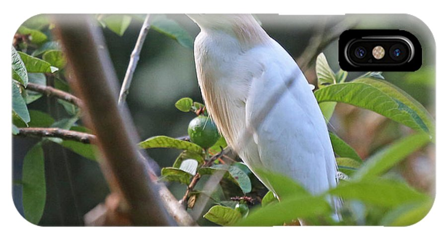 Nature IPhone X / XS Case featuring the photograph Cattle Egret 1 by Mike Dickie