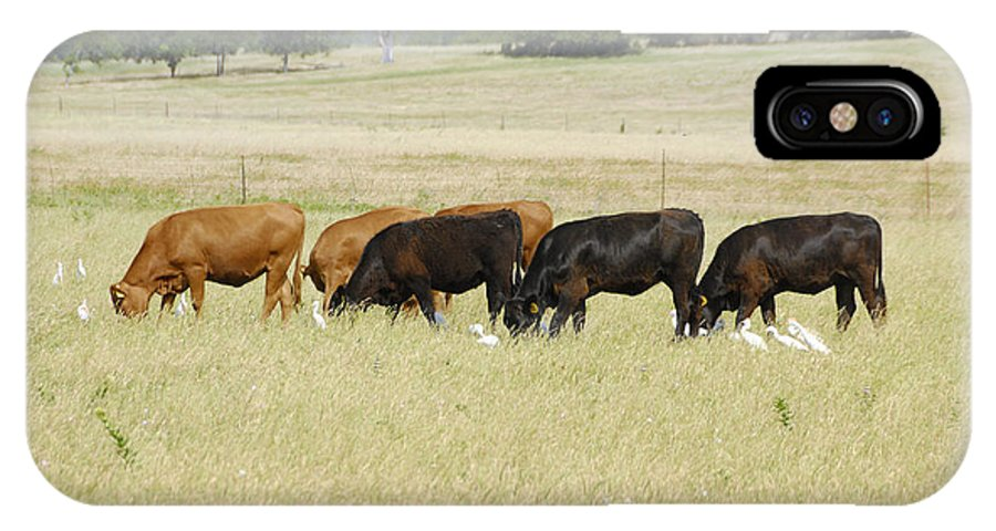 Herd IPhone X Case featuring the photograph Cattle Grazing by Charles Beeler