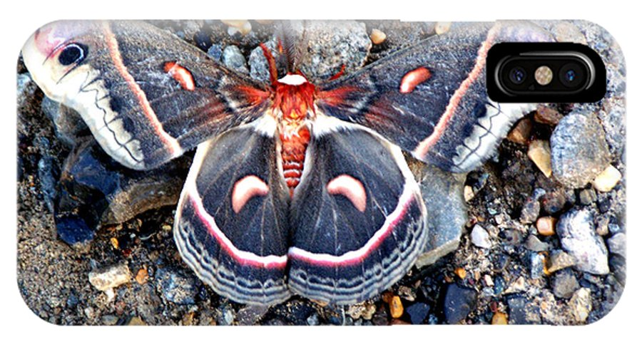 Cecropia Moth IPhone X Case featuring the photograph Cecropia Moth by Kathy White
