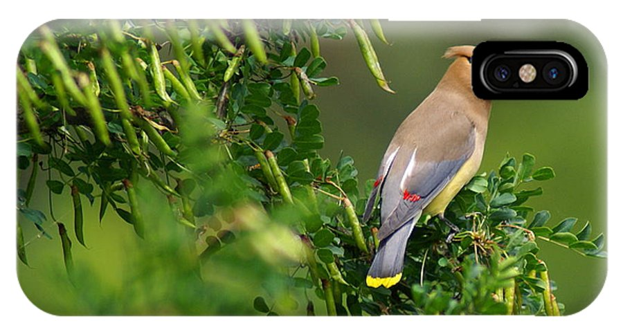 Birds IPhone X Case featuring the photograph Cedar Waxwing 3 by Ben Upham III