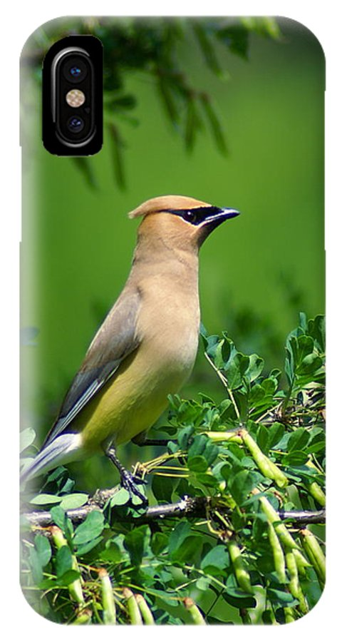 Birds IPhone X Case featuring the photograph Cedar Waxwing 4 by Ben Upham III