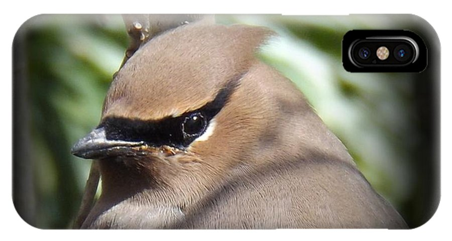 Profile IPhone X Case featuring the photograph Cedar Waxwing Profile by Sara Raber