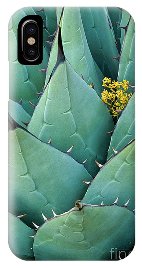 Agave Americana IPhone X Case featuring the photograph Century Plant And Tiny Blossom by Inge Johnsson