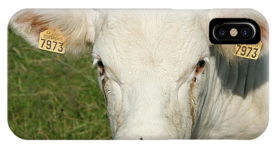 Cow IPhone X Case featuring the photograph Charolais Cow by Christiane Schulze Art And Photography