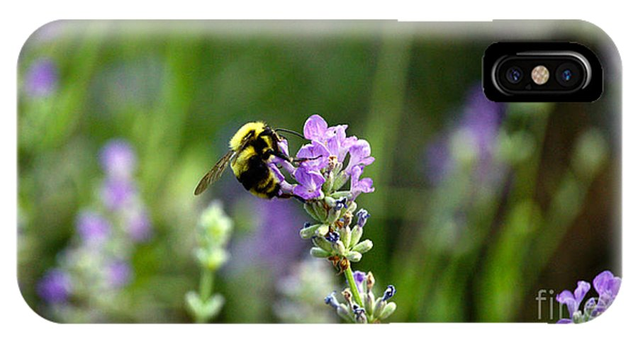Bee IPhone X Case featuring the photograph Chasing Nectar by Crystal Harman