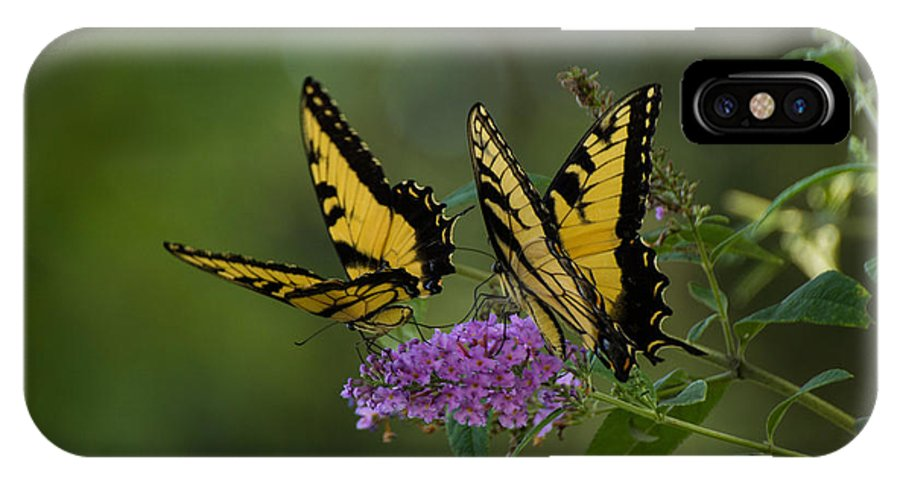 Butterflies IPhone X Case featuring the photograph Chasing The Day by Julie Andel