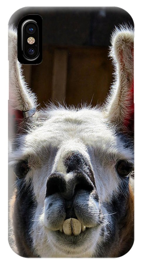 Alpaca IPhone X Case featuring the photograph Cheese by Art Dingo