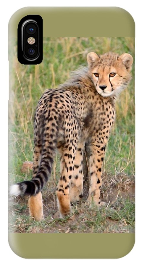 Cute IPhone X Case featuring the photograph Cheetah Cub Looking Your Way by Tom Wurl