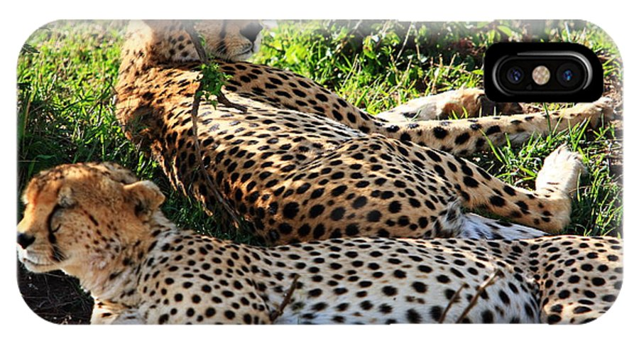 Cheetah IPhone X Case featuring the photograph Cheetah - Masai Mara - Kenya by Aidan Moran