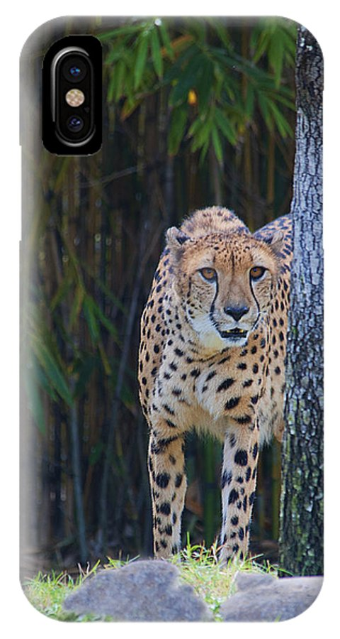 Cheetah IPhone X Case featuring the photograph Cheetah Watching by Keith Lovejoy