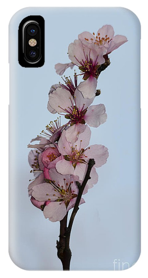 Cherry IPhone X Case featuring the photograph Cherry Blossom Sprig by Steev Stamford