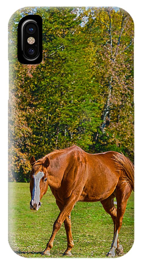 Horse IPhone X Case featuring the photograph Chestnut Red Horse by Sandi OReilly