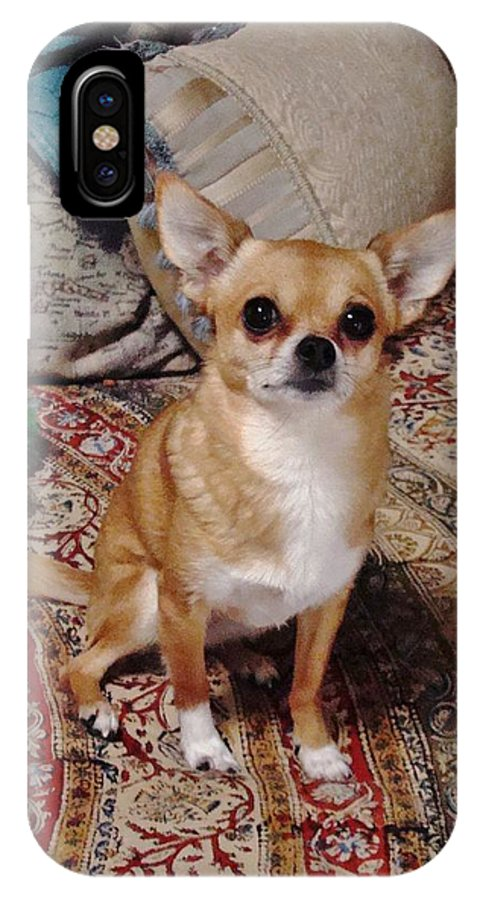 Chi IPhone X Case featuring the photograph Chihuahua Cutie by Diane Grindol