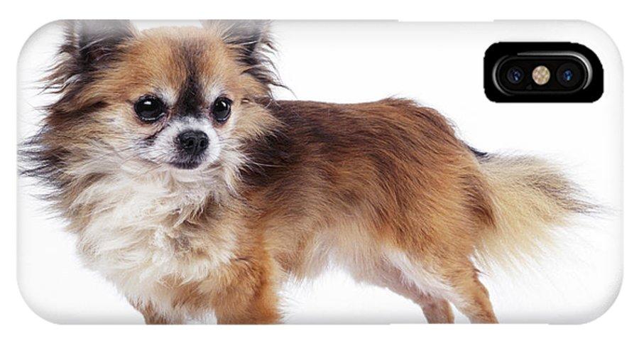 Chihuahua IPhone X / XS Case featuring the photograph Chihuahua Dog by John Daniels