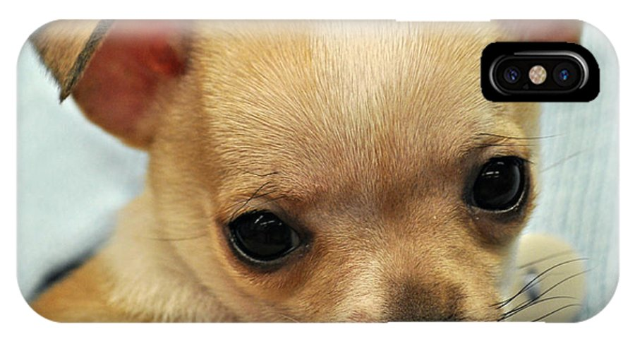 Chihuahua IPhone X Case featuring the photograph Chihuahua Precious by Mindy Bench