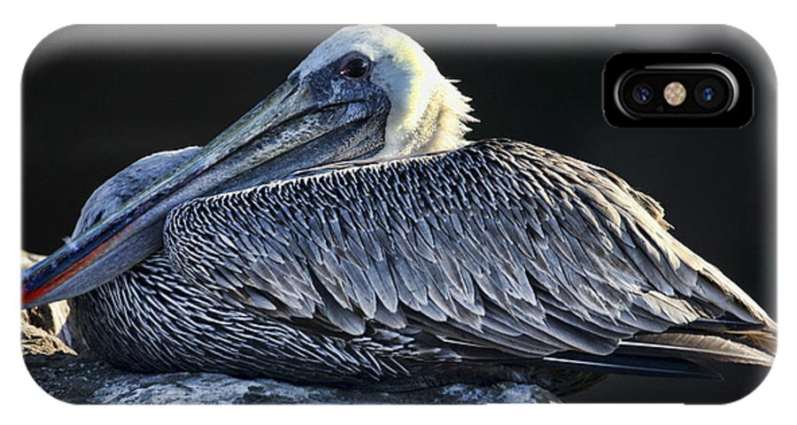 Pelican IPhone X Case featuring the photograph Chillaxin' By Diana Sainz by Diana Raquel Sainz
