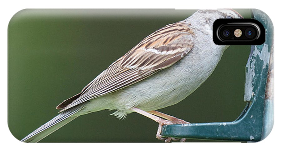 Birdfeeder Visitors IPhone X Case featuring the photograph Chipping Sparrow by Kristin Hatt
