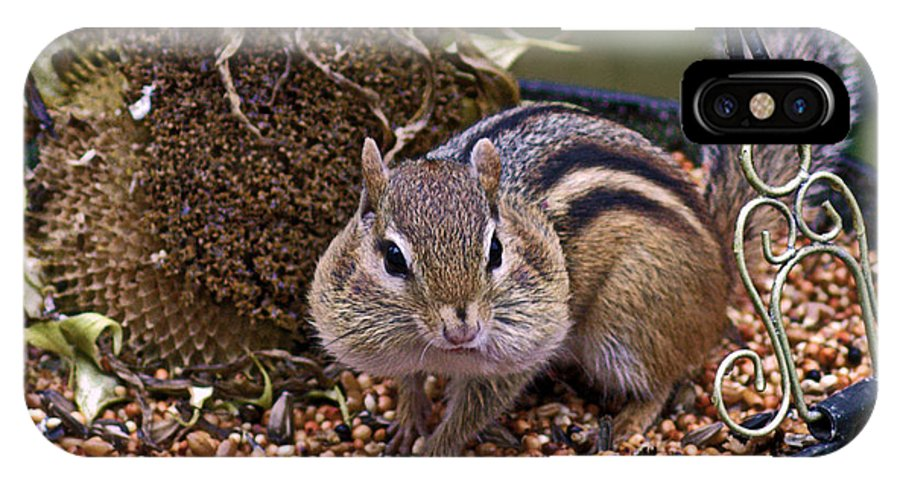 Chipmunk Cuteness IPhone X Case featuring the photograph Chippy Cheeks by Catherine Melvin