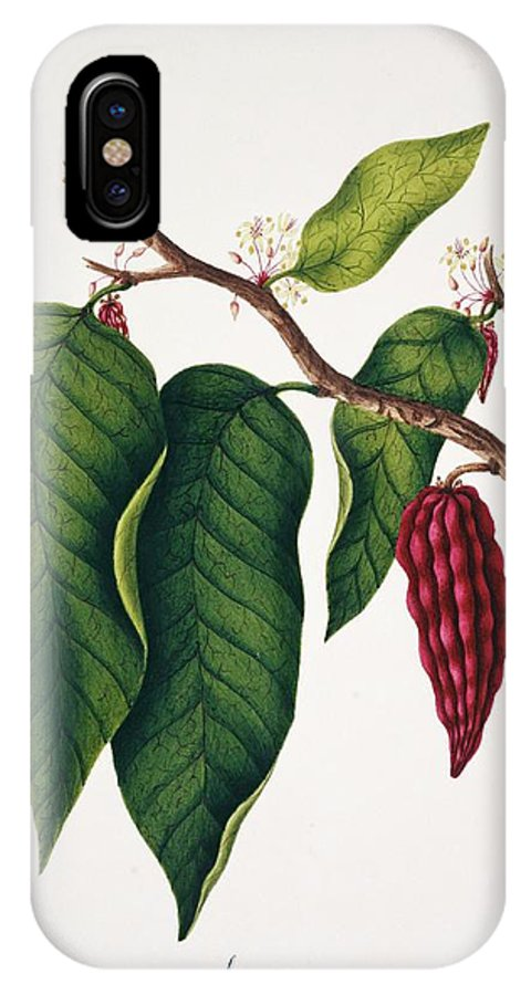 Plant IPhone X Case featuring the photograph Chocolate Cocoa Plant by Natural History Museum, London/science Photo Library