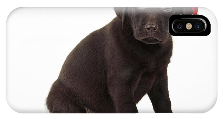Chocolate Labrador IPhone X / XS Case featuring the photograph Chocolate Labrador Puppy, 6 Weeks Old by John Daniels