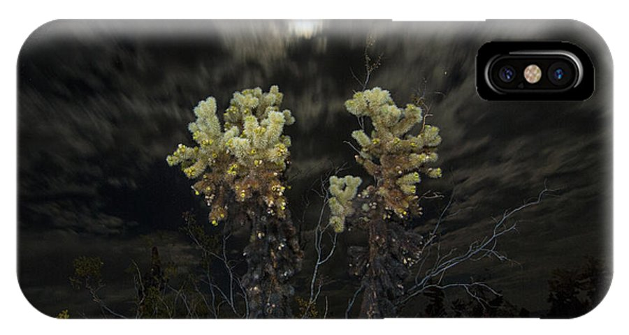 Cholla Cactus IPhone X Case featuring the photograph Cholla Light - Joshua Tree National Park by Jamie Pham