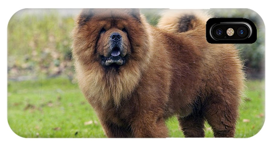 Chow IPhone X / XS Case featuring the photograph Chow Chow by Jean-Michel Labat