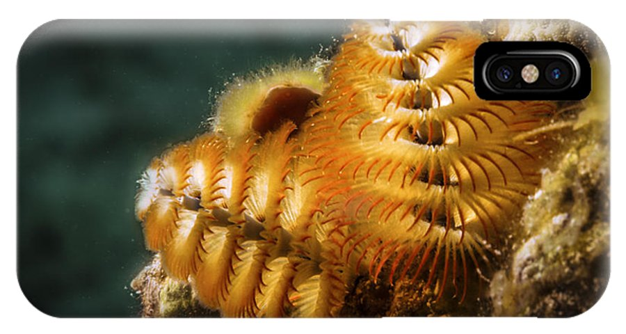 Christmas Tree Worm IPhone X Case featuring the photograph Christmas Tree Glory by Jean Noren