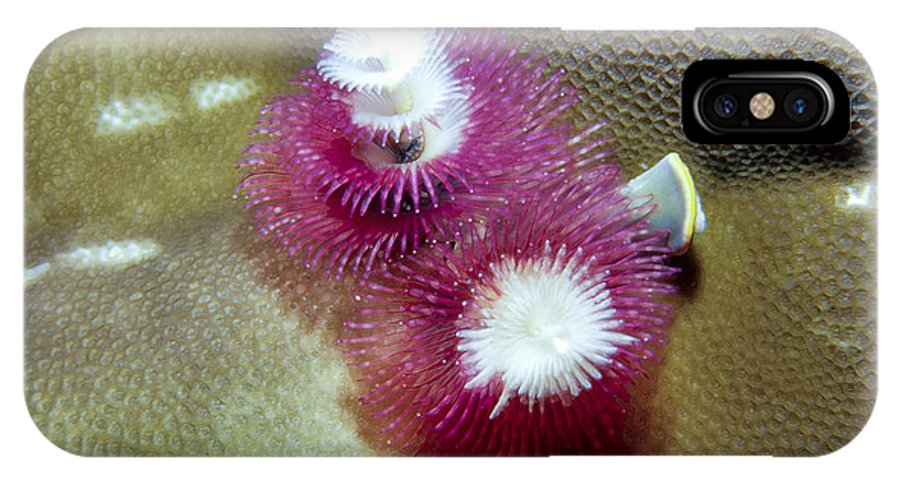 Micronesia IPhone X Case featuring the photograph Christmas Tree Worms 2 by Dawn Eshelman