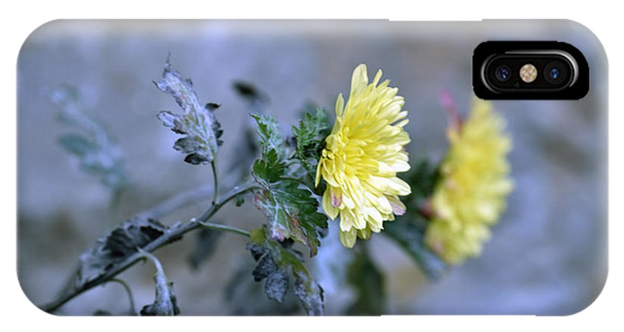 Abstract IPhone X Case featuring the photograph Chrysanthemum losing hope by Adrian Bud