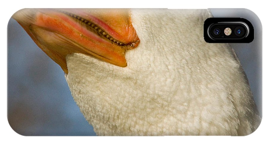 Tulsa Photographs IPhone X Case featuring the photograph Chuck The Duck Vi by Vernis Maxwell