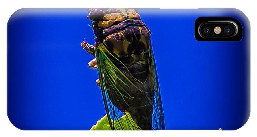 Cicada IPhone X Case featuring the photograph Cicada by Jason Picard