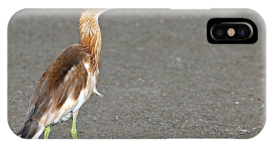 Adult IPhone X / XS Case featuring the photograph Cinnamon Chestnut Bittern by Paul Fell