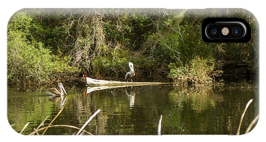 Pelicans IPhone X Case featuring the photograph Claim On The Log by Mechala Matthews