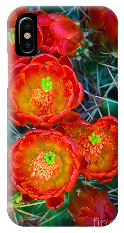 America IPhone X Case featuring the photograph Claret Cup by Inge Johnsson