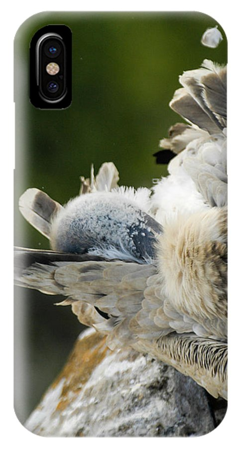 Africa IPhone X Case featuring the photograph Clean Up Time by Alistair Lyne