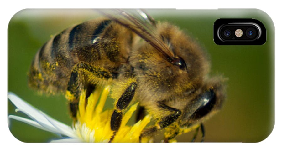 Optical Playground By Mp Ray IPhone X Case featuring the photograph Close Encounter Of The Bee Kind by Optical Playground By MP Ray