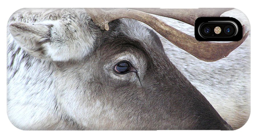 Animal IPhone X Case featuring the photograph Close-up Caribou Reindeer by Sylvie Bouchard