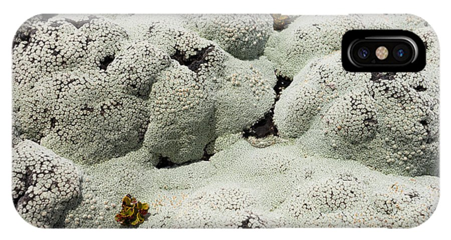 Algae IPhone X Case featuring the photograph Close Up Of Lichens Commonly Called Rock Moss by Stephan Pietzko